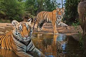 The SC questions the validity of newly formed National Board for Wildlife (headed by the PM), puts on hold 100 projects near wildlife sanctuaries cleared by it.