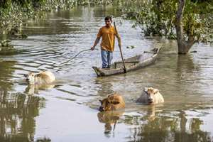 A man takes his cattle to dry land after floods hit Dikhowmukh in Sivasagar district of Assam.