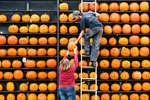Steve Ward and Donna Workman add pumpkins to a display as work on Ric Griffith's Pumpkin House continues, in Kenova, WV.