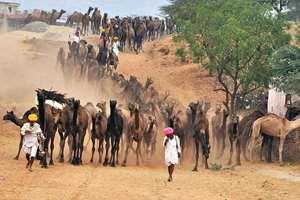 Camel traders at the camel fair in Pushkar, Rajasthan.
