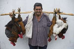 Ines Paz stops in the street to pose for a picture with his chickens in Santa Barbara, Honduras. Paz, 71, says he sells about six of his chickens a day, and charges $6 dollars each.
