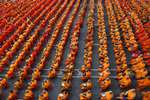 Buddhist monks holding bowls sit on chairs before civilians drop dried food into the bowls in Bangkok, Thailand. Thousands of Buddhist monks took part in the event co-organized by government and private sectors aimed at collecting supplies and dried foods for Buddhist monks and civil servants working in the troubled southern provinces of Pattani, Yala, Narathiwat and Songkhla.