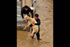 Kashmiri men evacuate a sheep from a flood affected area in Srinagar.