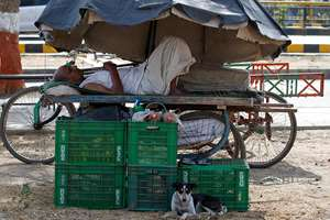 A man rests on a hand cart under a market umbrella on a hot day in Ahmedabad. Eating onions, lying in the shade and splashing into rivers, people were doing whatever they could to stay cool during a brutal heat wave that has killed more than 1,000.