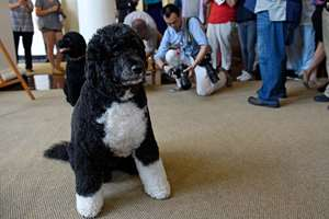 People take photos of first dog Bo while touring the White House in Washington. The White House ended a long-standing ban on tourists taking photos or using social media during public tours of the building.