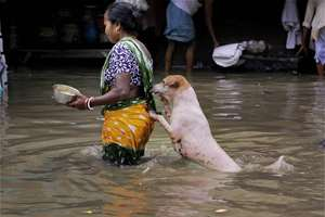 A stray dog takes the support of a woman to cross a flooded street in Kolkata.