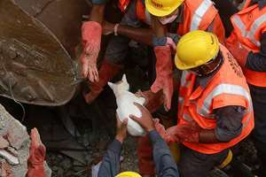 Rescuers pull out a cat from the debris at the site of building collapse in Thane, Mumbai.