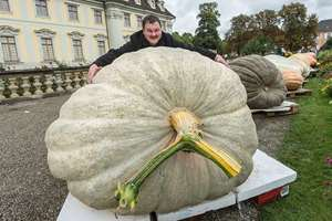 Robert Jaser poses with his Atlantic Giant pumpkin at the palace in Ludwigsburg, Germany. Weighing 812.5 kilogramms, the pumpkin won the German championship title.