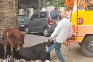 A VHP worker kicks a cow while going for immersion of ashes of Ashok Singhal in Lucknow, the video clip went viral on social media platforms.