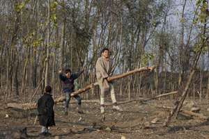 Children play on a tree branch in Ajas, some 52 Kilometers (33 miles) north east of Srinagar, Kashmir.