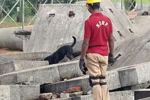 A canine of the NDRF being trained for search and rescue operations from under a collapsed structure during natural calamities like earthquake in New Delhi.