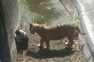 Video: Youth Killed by Tiger at Delhi Zoo While Trying to Take a Picture